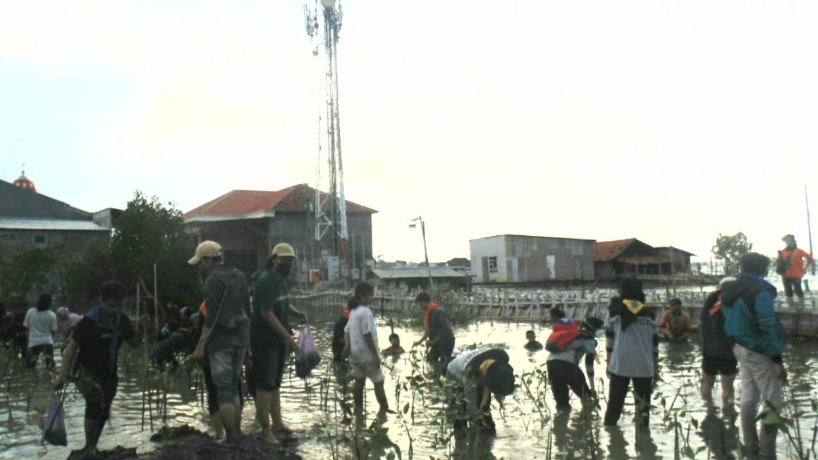 Pegiat Lingkungan Semarang Tanam Mangrove di Tambakrejo